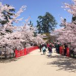 弘前公園へ桜を見に行くアクセス方法 駐車場とバスと徒歩ルート