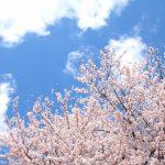 大河原の一目千本桜へのアクセス 電車での行き方と車の駐車場と料金