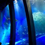 八景島シーパラダイスふれあいラグーンで予約体験した話とイルカの楽しみ方
