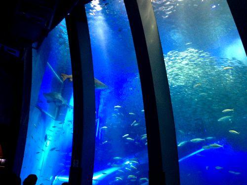 八景島シーパラダイスの巨大水槽