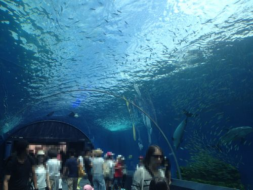 八景島シーパラダイスのドルフィンファンタジー内の画像