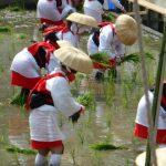 住吉大社の御田植神事のお祭りの植女って何?開催日時と会場への行き方も
