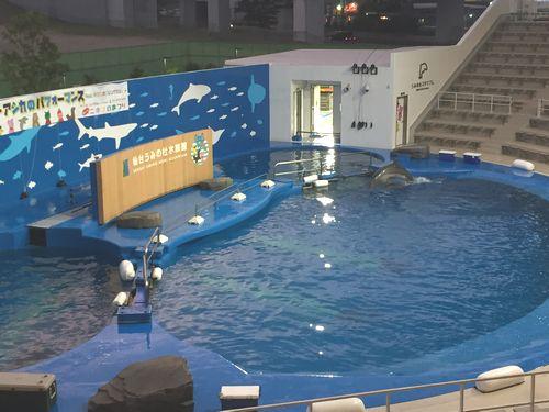 仙台うみの杜水族館 夜 イルカ プール