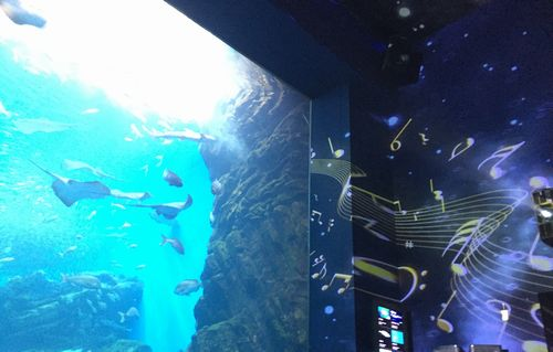 仙台うみの杜水族館の年間パスポートでイベントへ~プロジェクションマッピング感想クラゲがきれい