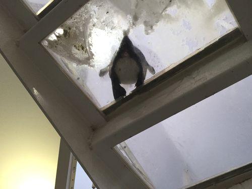 仙台うみの杜水族館 ペンギン 下から
