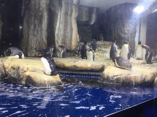 仙台うみの杜水族館 ペンギン 夜