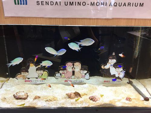 おそ松さん 空想水族館 仙台 うみの杜水族館