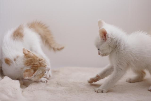 先住猫と新入り猫の対面