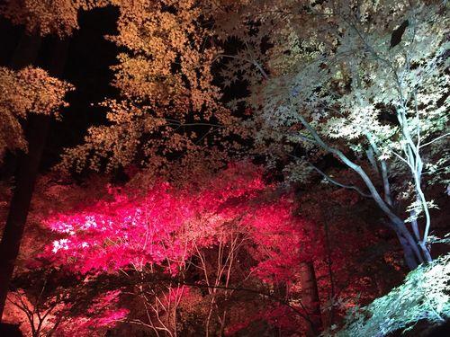 円通院 松島紅葉ライトアップ