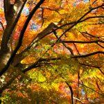 松島の紅葉スポットやライトアップ~駅から徒歩で観光できる場所をご案内