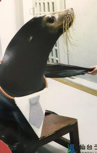 仙台うみの杜水族館 アシカと握手した写真