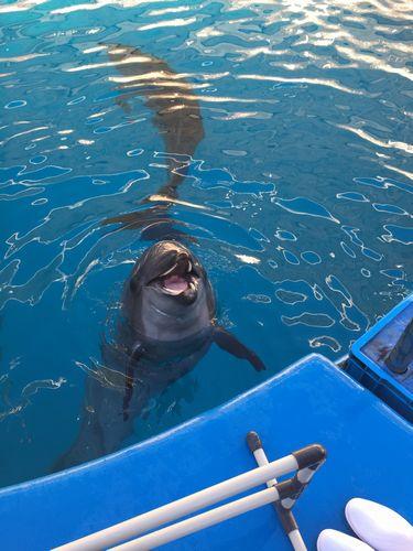 仙台うみの杜水族館 スタジアムバックヤードツアーでイルカショーのイルカの写真