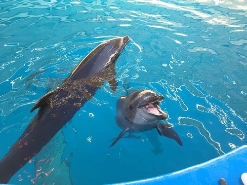 仙台うみの杜水族館 スタジアムバックヤードツアーのイルカ二匹の写真