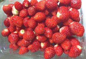 イチゴジャムに使う苺