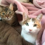 猫が添い寝を嫌がるときの方法~これで同じ布団で一緒に寝ることができた